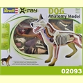 X-RAY DOG ANATOMY MODEL - Revell - 1/5